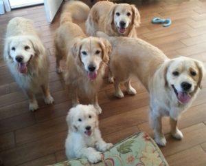 Bella Pups